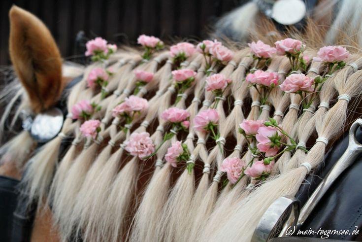 Am Sonntag, 25. August 2013 findet der traditionelle Rosstag mit großem Festzug in Rottach-Egern statt. Er führt mit über 200 Pferden von der Ganghoferstraße über die Seestraße zum Festplatz nac