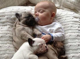 Pug blanket-not normally into animal pics, but this one pretty freakin' cute!!
