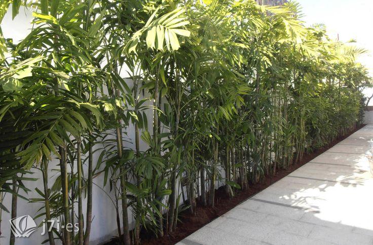 7 detalles para una pared tropical : Jardines de estilo tropical de Jardineria 7 islas