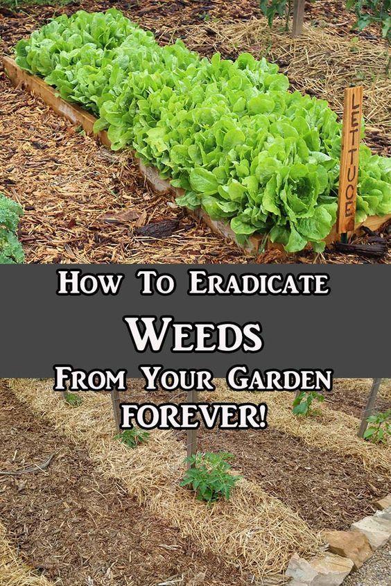 How To Eradicate Weeds From Overtaking Your Garden. Make Gardening Easy! #easyvegetablegardeningideas #vegetablegardening