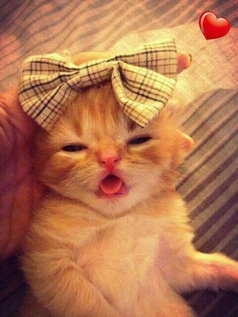 Cute :)))