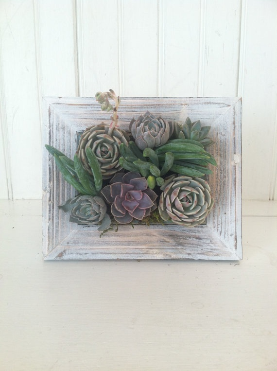 my new favorite <3  Vertical Succulent Planter by VerticalFlora on Etsy, $52.00