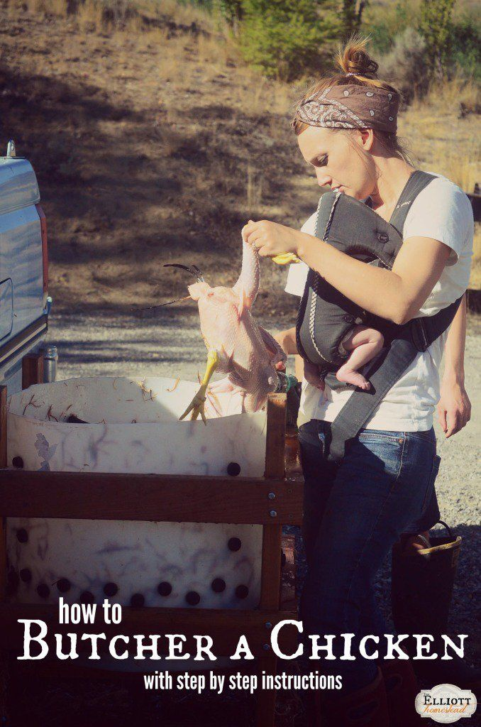How To Butcher A Chicken (with step-by-step instructions) | The Elliott Homestead (.com)