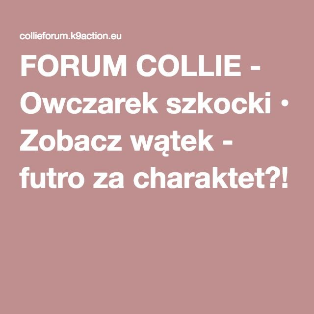 FORUM COLLIE - Owczarek szkocki • Zobacz wątek - futro za charaktet?!