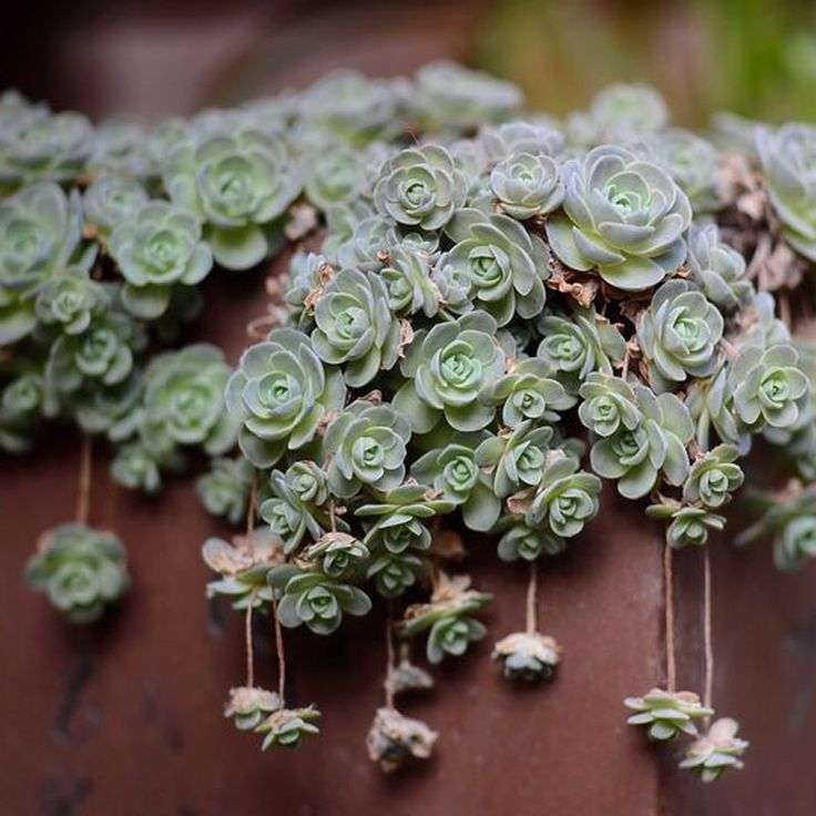 Pin By Paula Roegge On Oh So Succulent