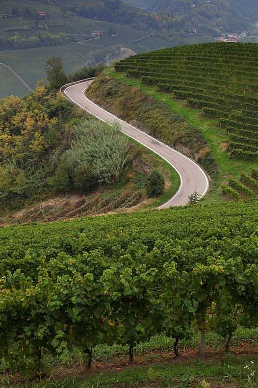Vineyards of Alba - Cuneo, Italy  Province of Cuneo, Piemonte
