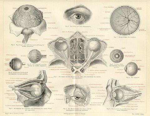 Google Image Result for http://www.vintage-views.com/MeyersKonversations/Vol2/Wood/images/0527273k6-AugeDesMenschen.jpg