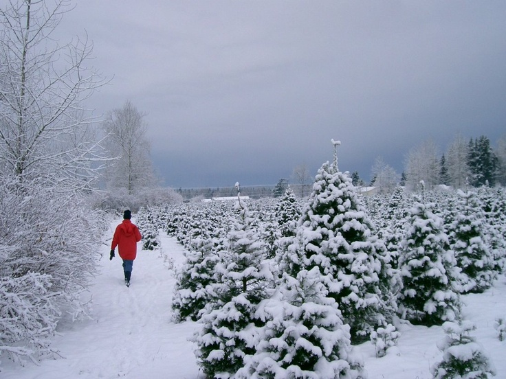 23 best Michigan Christmas :) images on Pinterest | Winter snow ...