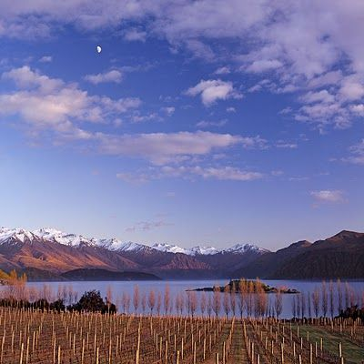 The vineyards of Central Otago, New Zealand, are the southern most vineyards in the world (45° South). #wine