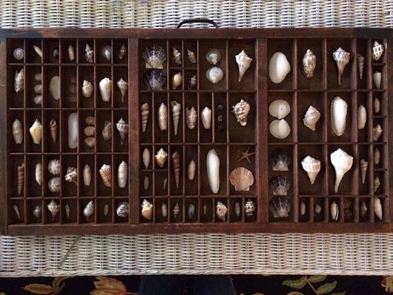 This beautiful, one-of-a-kind wall art display features an artfully curated collection of shells in an vintage printer type tray. The tray is wired for