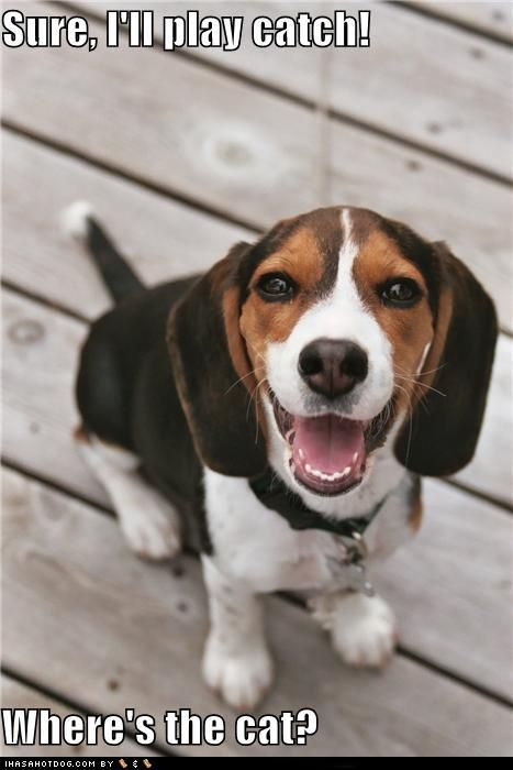 love beaglesHound Dog, Beagles Puppies, Beagle Puppies, Dogs Breeds, Pets, Beagles Dogs, Happy Beagles, Beagle Dog, Animal
