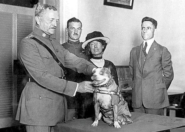 Gen. John Pershing awards Sergeant Stubby with a medal in 1921.
