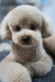 Teddybear clip