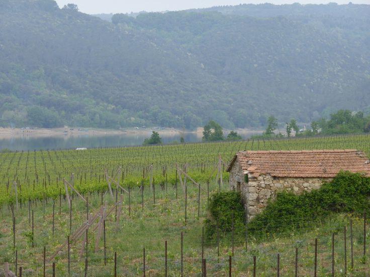 Corbarasee, hier wachsen die Reben für den Orvieto Classico