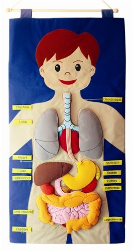 Felt Human Body Wall Chart