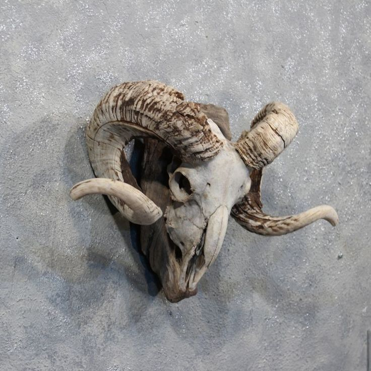 The 225 best Horns Reference images on Pinterest   Antlers, Horns ...