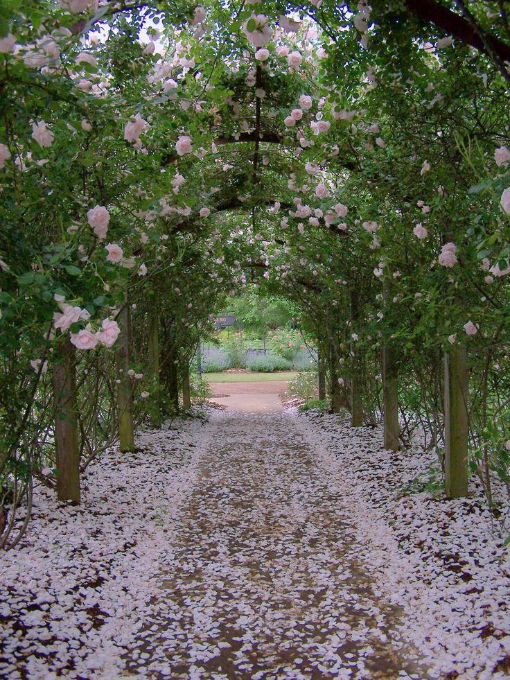 Heirloom Roses in full bloom soon at Barnsley Gardens Resort
