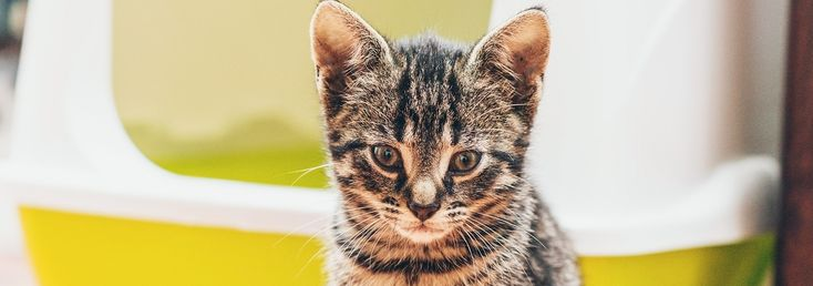 Pet parents know that litter boxes come with the territory, but a fun and functional hidden litter box spot will make you and your feline roommate happy.