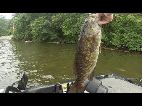 Bass Fishing Videos