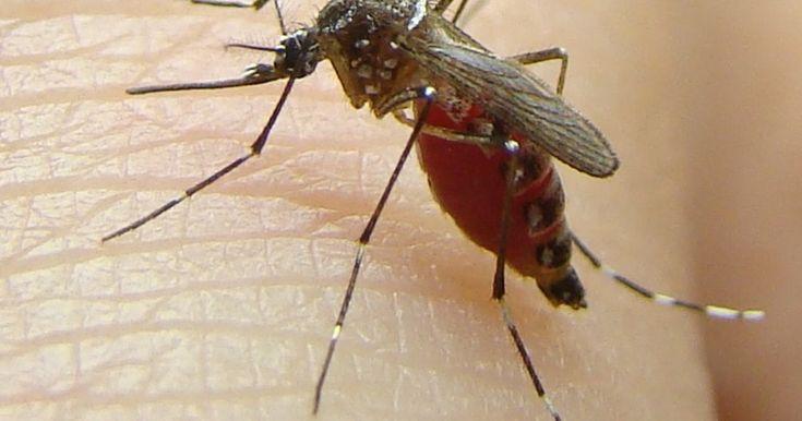 Ceará registra mais uma morte por dengue e número chega a 15