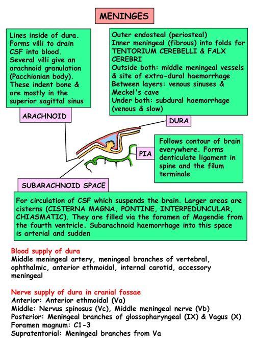 Anatomia immediata - testa e del collo - Aree / organizzazione - meningi - Cisterne
