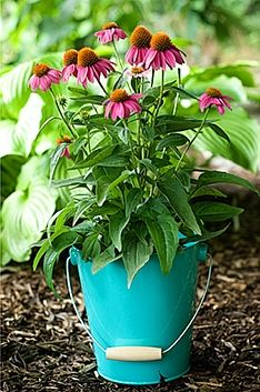 Find new ways to plant flowers, herbs and vegetables in your garden with unique containers. Colorful pails, baskets and bowls create the perfect container garden. Click in for tips drainage and types or plants to grow.