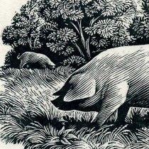 Wood engraving by Andrew Davidson, Free Range