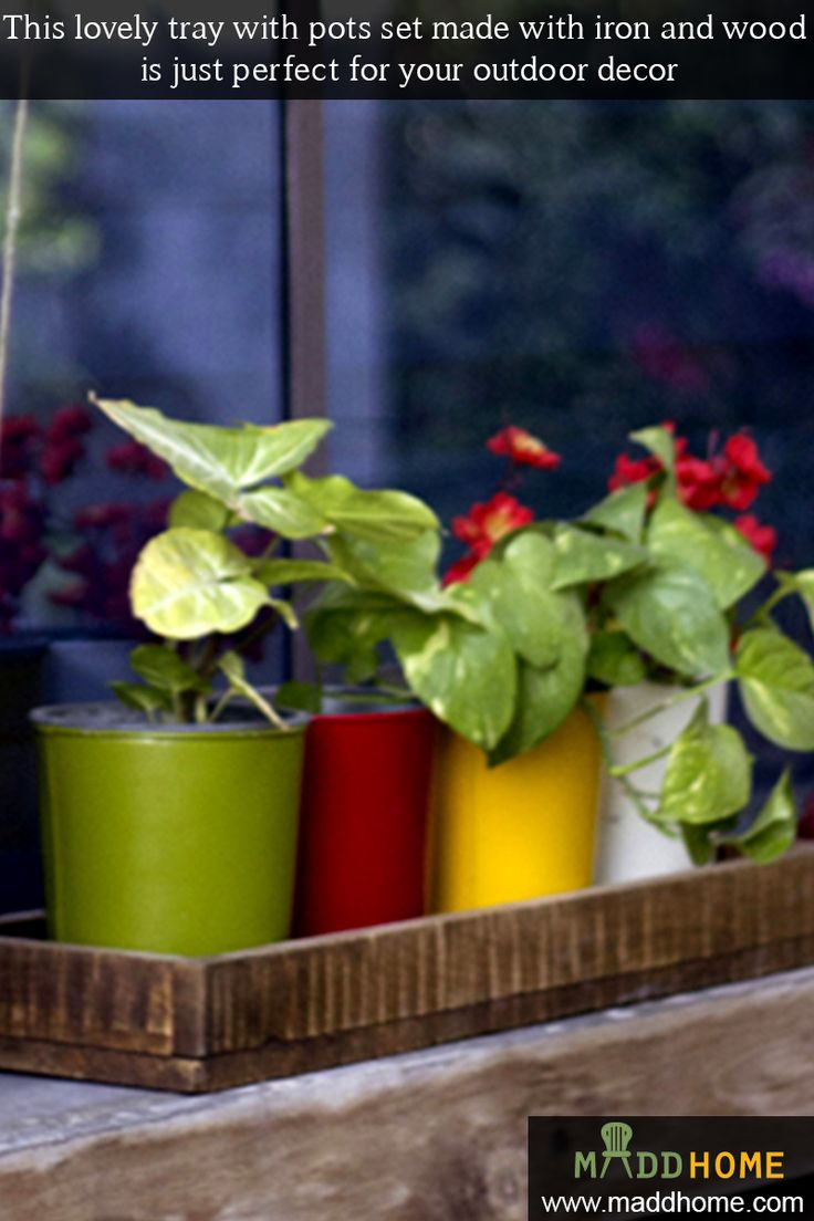 Adorable Little Plants Will Give A Refreshing Look To Your Outdoor Or Garden