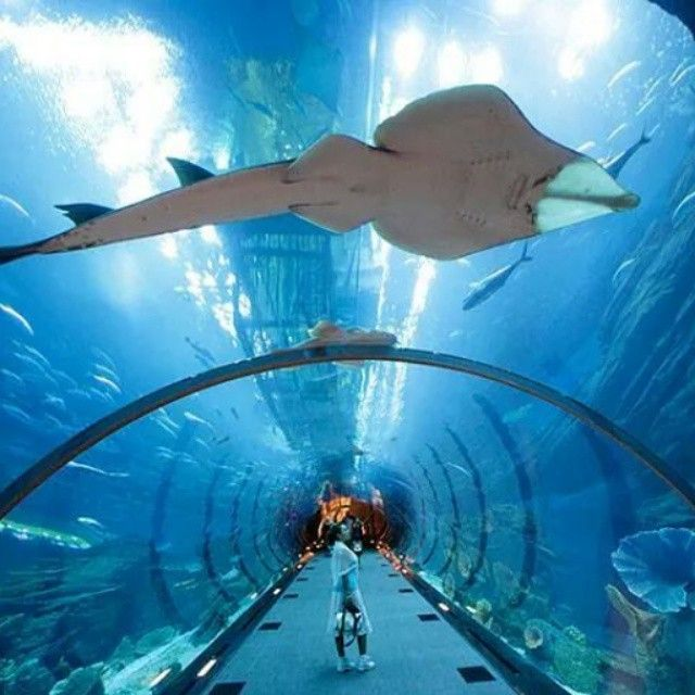 75 Best Barcelona With Kids Images On Pinterest