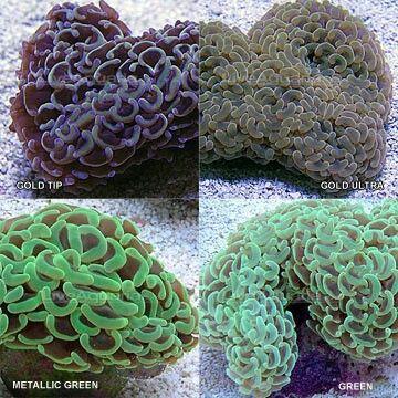 65 Best Coral Images On Pinterest Live Coral Saltwater