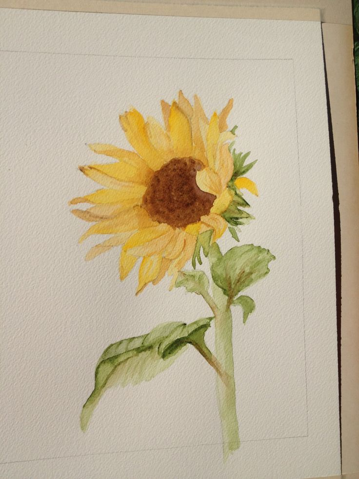 Sunflower watercolor...first try
