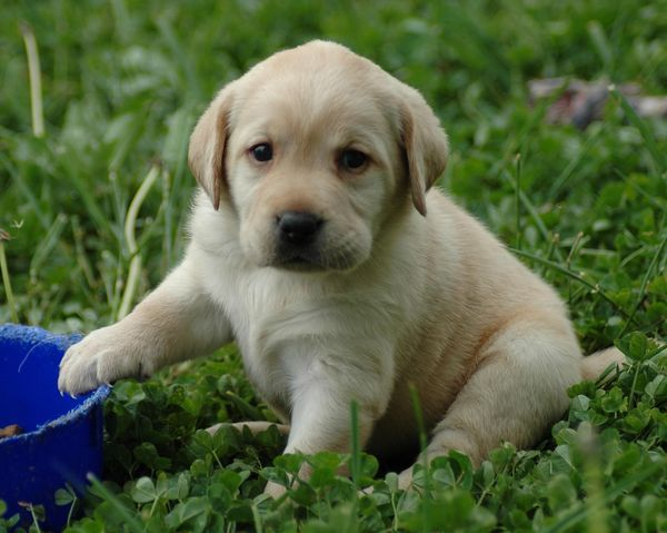 Dogs That Stay Small Forever Google Search An Addition