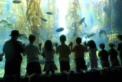 Kids at the Birch Aquarium