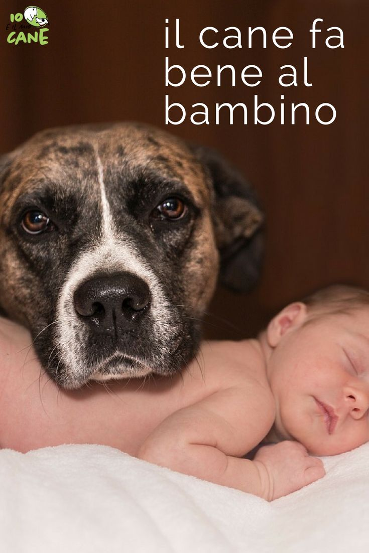 Il cane fa bene alla salute del bambino. Come?