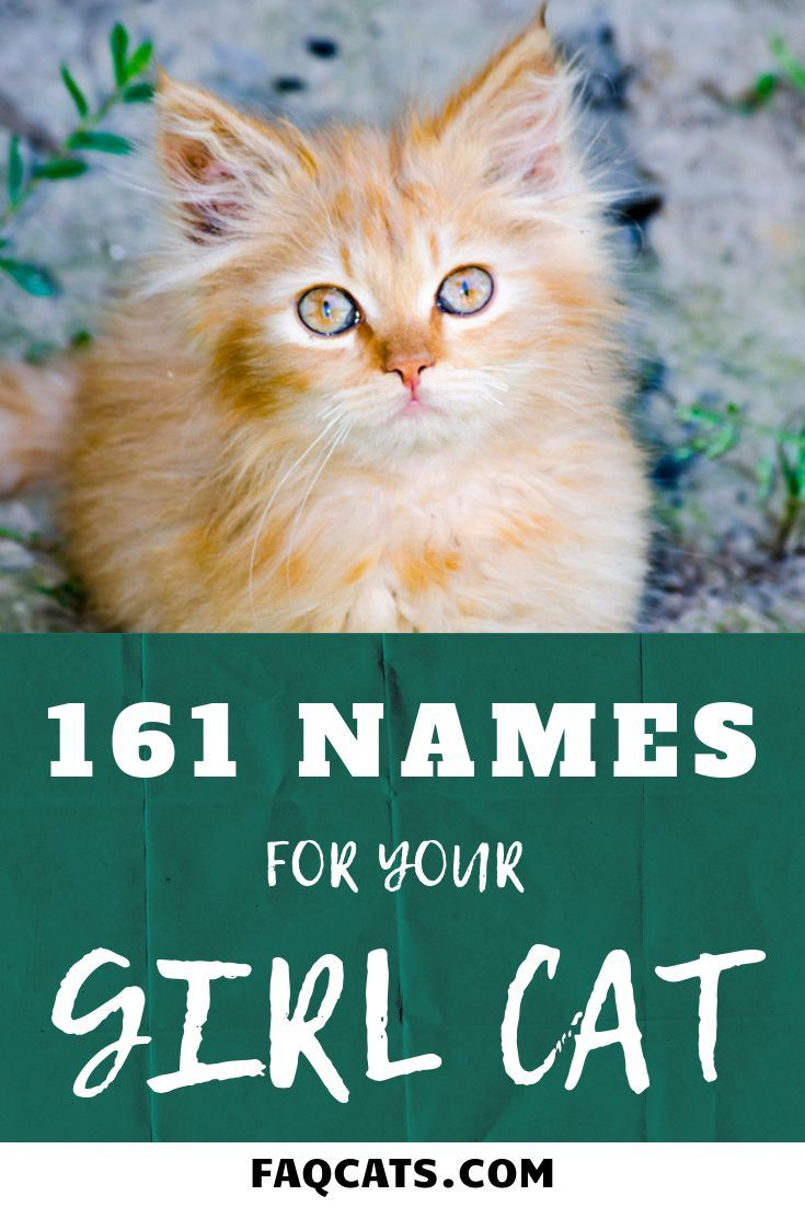 Looking Unique Girl Names For Your Cat Breed Click Over To Read Our Huge List Of 161 Cat Names Whether Your Cat Is G Kitten Names Cat Names Kitten Names Girl