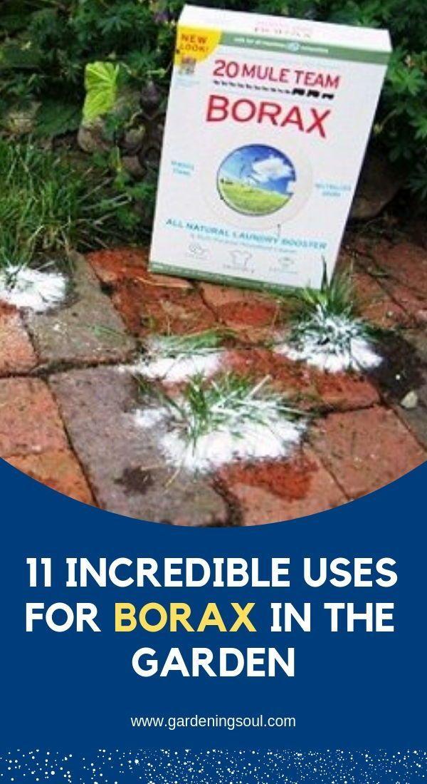 d0a887d149f638dc8347d5053d152d60 - Is Borax Safe For Vegetable Gardens