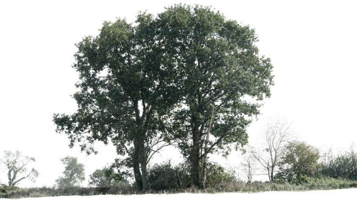 tree 12 png by gd08.deviantart.com on @deviantART