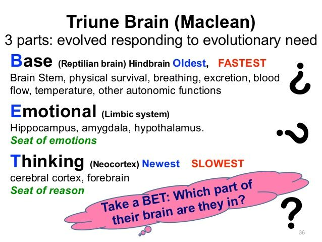 Triune Brain (Maclean) 3 parts: evolved responding to evolutionary need 36 Base (Reptilian brain) Hindbrain Oldest, FASTE...