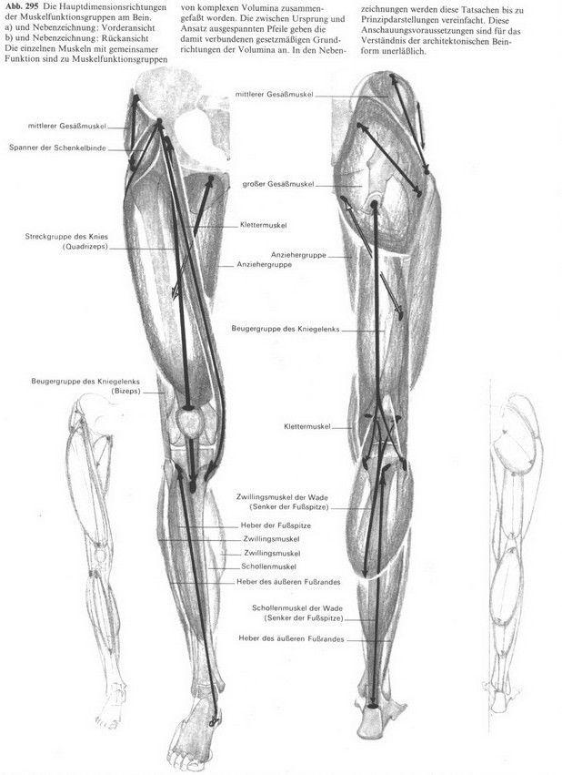 Beste Trap Muskel Bilder - Anatomie und Physiologie des ...