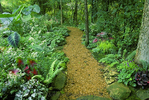 Pea Gravel Path In The Shade Garden Dreams Pinterest