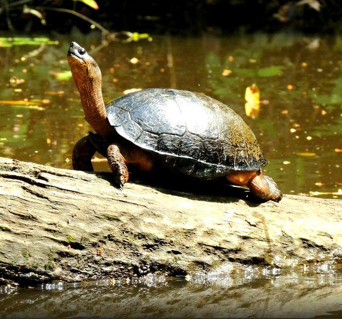 Parque nacional Tortuguero #CostaRica @HIMGPanama