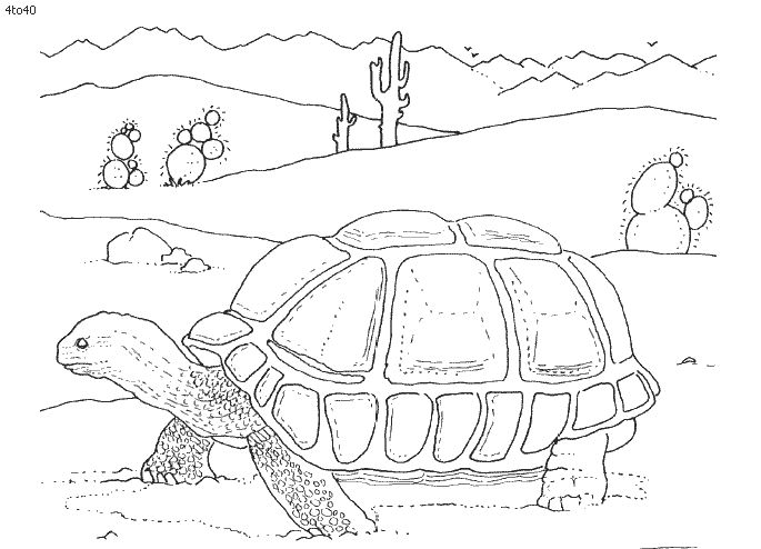desert animals for kids coloring pages coloring pages for adults pinterest coloring the o. Black Bedroom Furniture Sets. Home Design Ideas