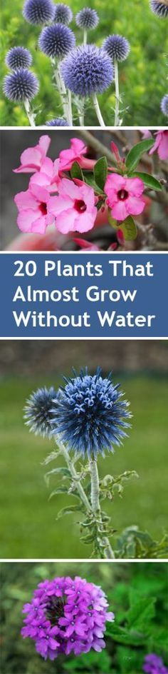 Plants, Drought Resistant Plants, Plants That Need Little Water, Drought Friendly Plants, Popular, Plants, Plant Gardening