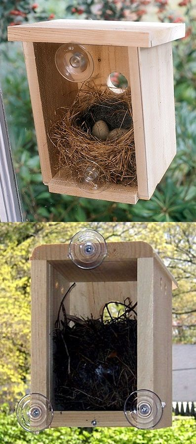 Great idea! How exceiting to be able to watch birds build their nest and hatch their babies right from my own window. Love the simple yet sturdy construction. The natural wood can be left as is, or finished if desired. The instructions gave ideas for placement, and it stuck easily to my window with very secure suction cups.