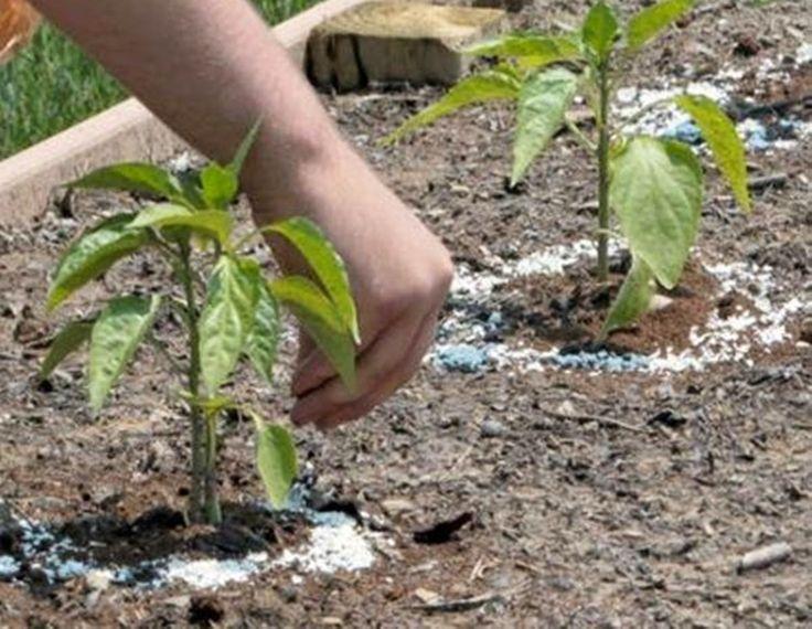 MENTŐÖTLET - kreáció, újrahasznosítás: Kerti csigák elleni védekezés