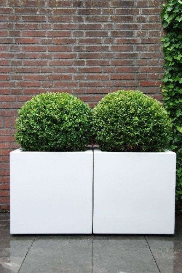 Witte plantenbakken van polyester, aangeplant met een Buxus bol. Polyester plantenbakken kunnen bij iedere woning stijl geplaatst worden en stellen nooit teleur