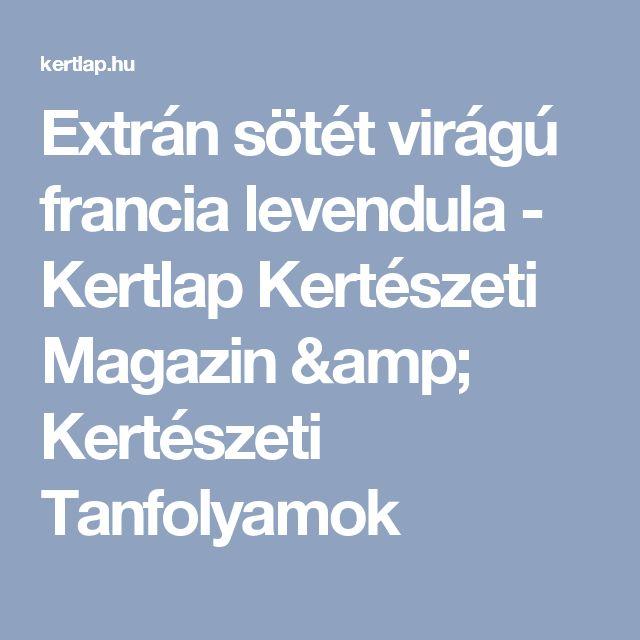 Extrán sötét virágú francia levendula - Kertlap Kertészeti Magazin & Kertészeti Tanfolyamok