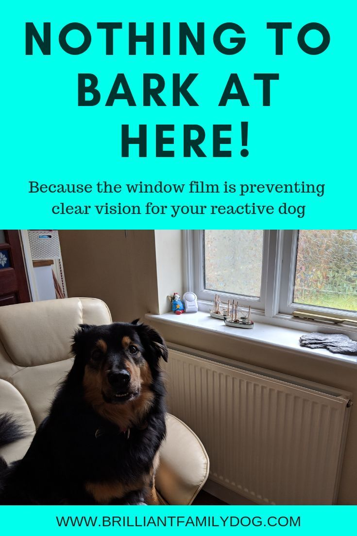 Window Barking And Fence Running Reactive Dog Dogs Dog Training