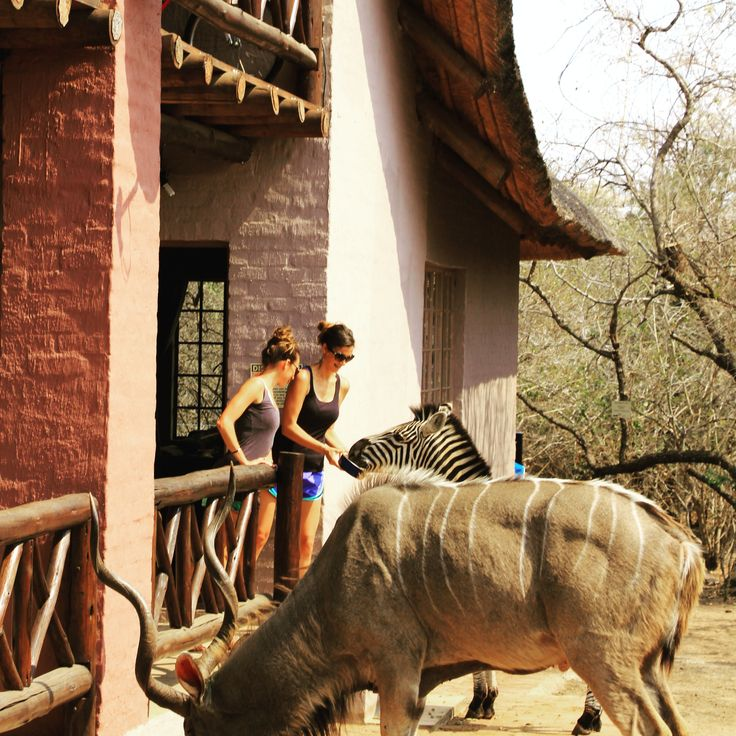 At ' Honey Badger Safari House' you can enjoy the most unique experience of hand feeding wild animals. Go to www.honeybadgersafais.co.za and book your stay today!
