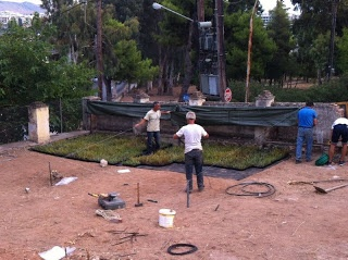 Stayia farm starts new rosemary nusrery...  This working model of sustainable, hyper-local urban agriculture demonstrates bio-intensive growing methods Here at Stayia Farm, we are committed to producing nothing less than the most natural, wholesome. Everything we grow is grown without the use of any sort of harmful, toxic, or otherwise (even minutely) human-harming pesticides.